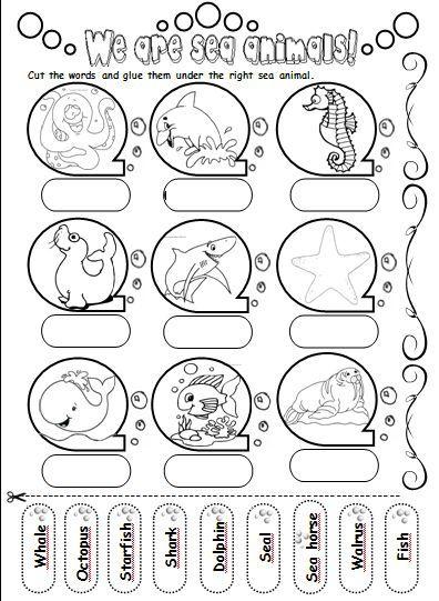 We are sea animals! - Teacher's love: