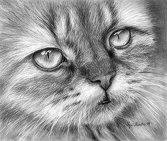 Beautiful Cat by Olga Shvartsur