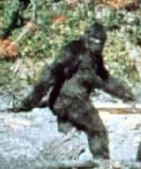 Breaking News: New Bigfoot Footage from Pocatello, Idaho