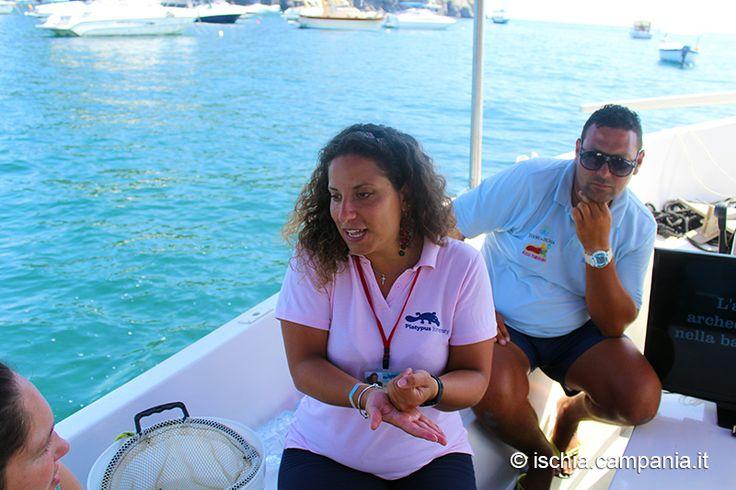 http://www.ischia.campania.it/index.php/alla-scoperta-di-aenaria-nel-mare-di-ischia-archeologia-biologia-e-divertimento/