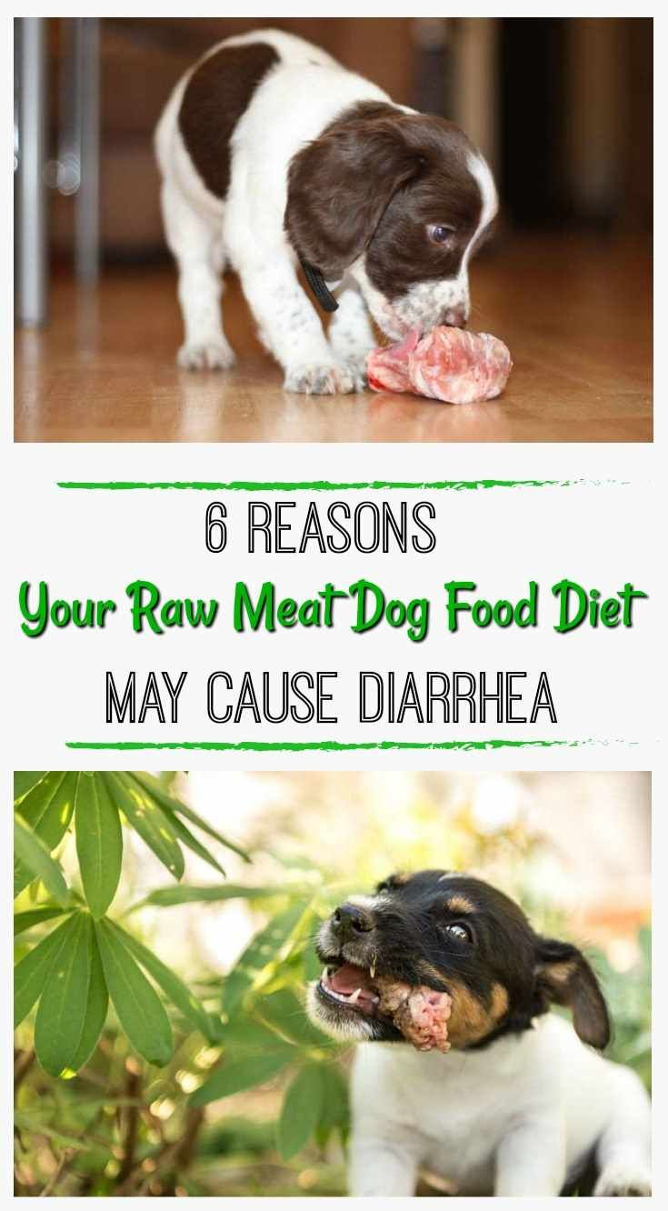 Is Your Raw Meat Dog Food Diet Causing Diarrhea Can Dogs Eat