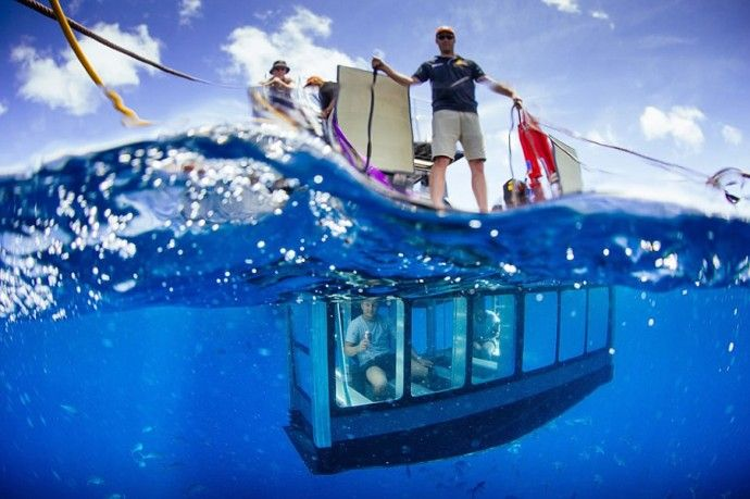Sip beer and admire the great white sharks from a personal glass pod