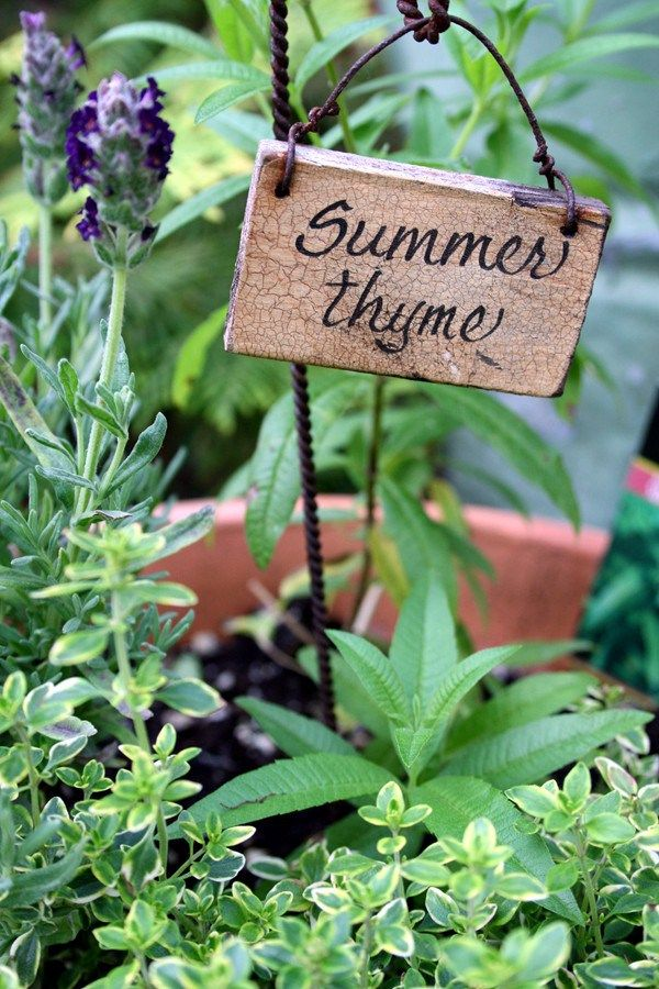 cute little garden sign summer thyme gardening greats