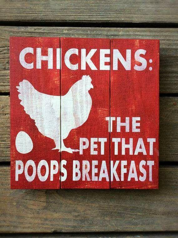 Hühner das Haustier, das Frühstück kackt