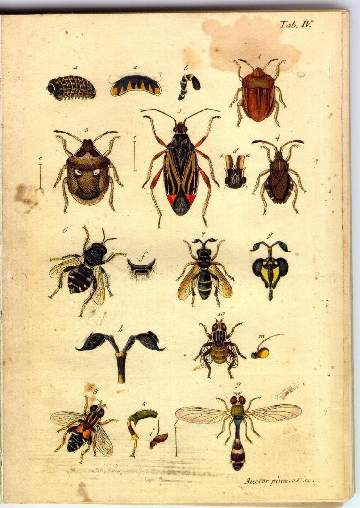Illustrations of beetles and bees,  Image number:sturm-tab-iv