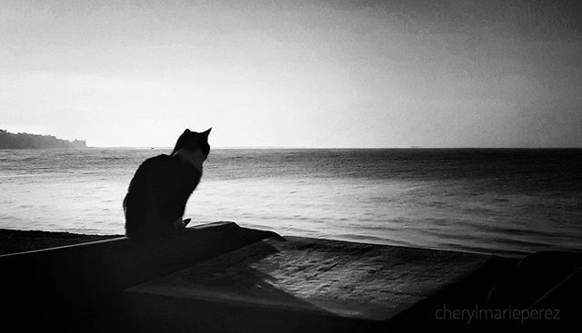 """The smallest feline is a masterpiece."" Leonardo da Vinci • • • •  #cat #bw_greece #caturday #blackandwhite #blackandwhitephotography #princely_bw #bnwmood #bnw_society #catsofgreece #insta_cat #bnw_demand #team_greece #tea_journals #silouette #seaside #amateurs_bnw #mobilephotography #ic_bw #ig_greece #iglovers_greece #vsco_bw #bnw_rose  #melancholy #monochrome #mood #quote"