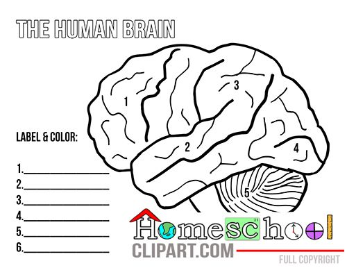 Home remedies to boost brain power image 5