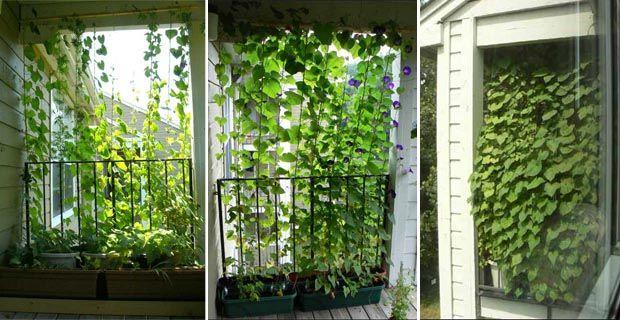 Camera con vista. Ma quale vista? Balconi e finestre potrebbero affacciarsi su paesaggi deludenti o addirittura offensivi. Per quanto sia...