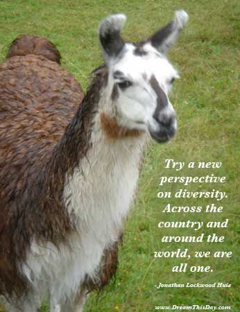 Try a new perspective on diversity. Across the country and around the world, we are all one. - Jonathan Lockwood Huie