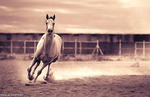 gorgeous pic and gorgeous horse
