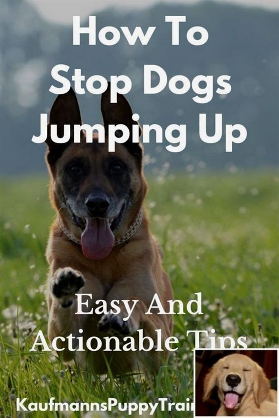 Dog Training Equipment Agility Dog Training Tips For Puppies