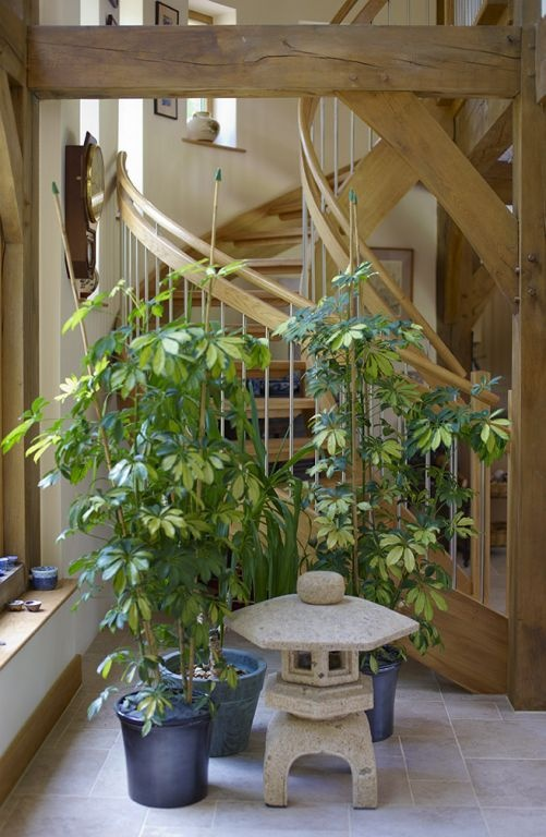 Plants to the corner of the hall area framed by the post & beam above camouflage the oak spiral staircase behind.