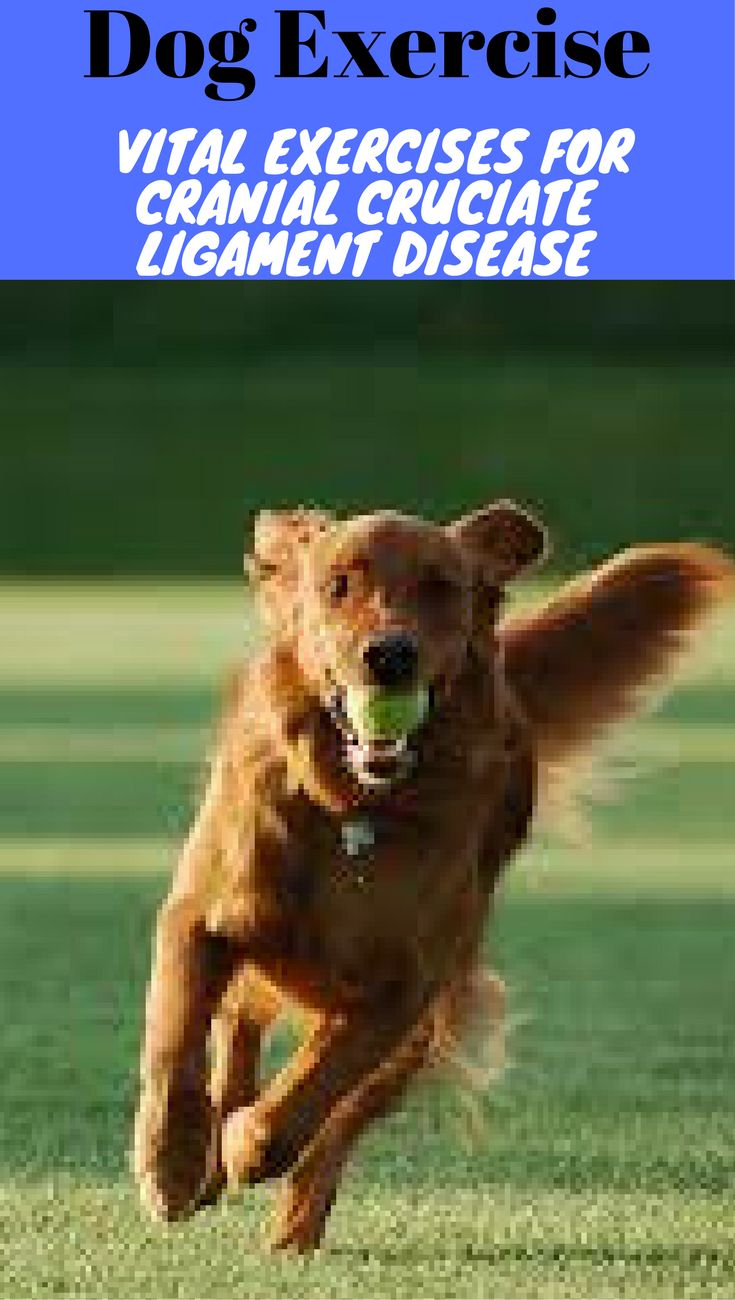 Dog exercise, vital exercises for cranial cruciate ligament disease. Dog physical therapy, health, wellness and prevention to promote a high quality of life for your dog.