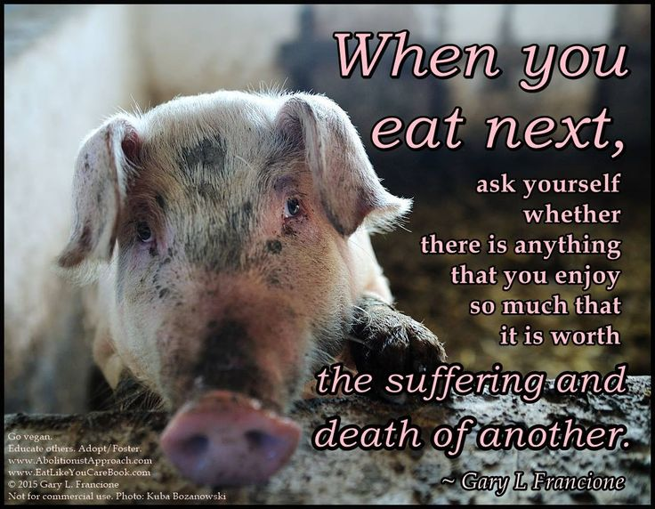 Animal Rights Quotes 31 Best Why Vegan Images On Pinterest  Animal Rights Vegan Life