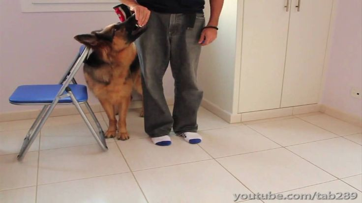 how to use a clicker to train a puppy