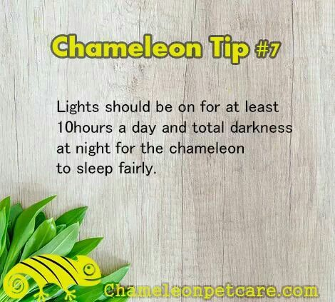 Get the best Help and Tips to care for your chameleon. Join us on the website!
