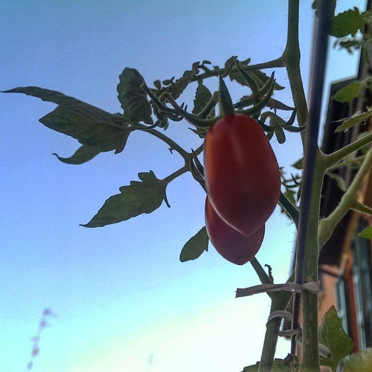 Ciel et tomates