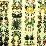 Excepcional composición en de múltiple fauna y flora en forma de columnas donde hay cabida para distintos tipos de pájaros, mariposas, bogavante, caracoles, tortugas, camaleones, pulpos, etc. acompañando frutas y frutos, flores, hojas; un vergel botánico. Predomina el verde sobre el fondo amarillo tenue, aunque en este diseño aparecen el arcoiris cromático de la naturaleza  Tela 100% algodón de 220 grs m/2, exclusiva de La Tapicera y diseñada por
