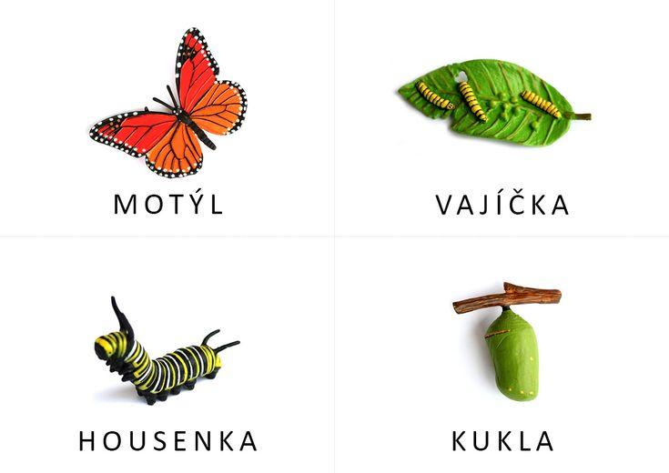 Podklad pro vytvoření knížečky s vývojem motýla podle modelů Safariology.
