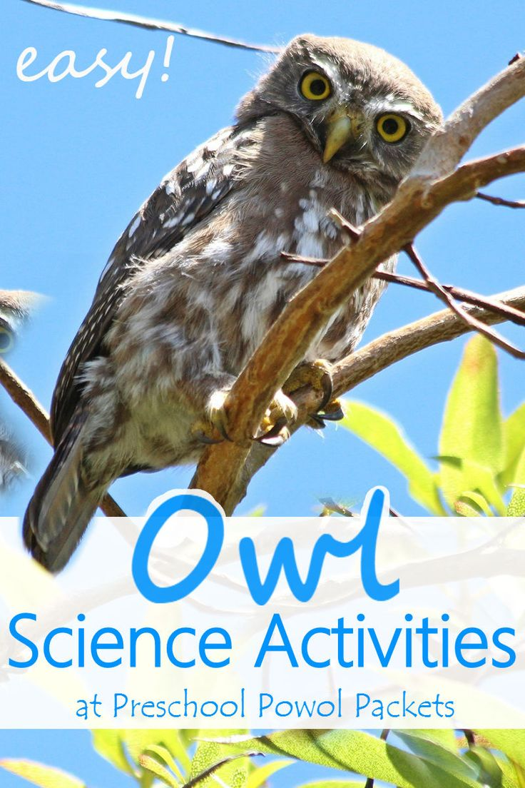 Fun owl science activities for preschool, kindergarten, and elementary grades! Perfect for an owl theme or forest theme!