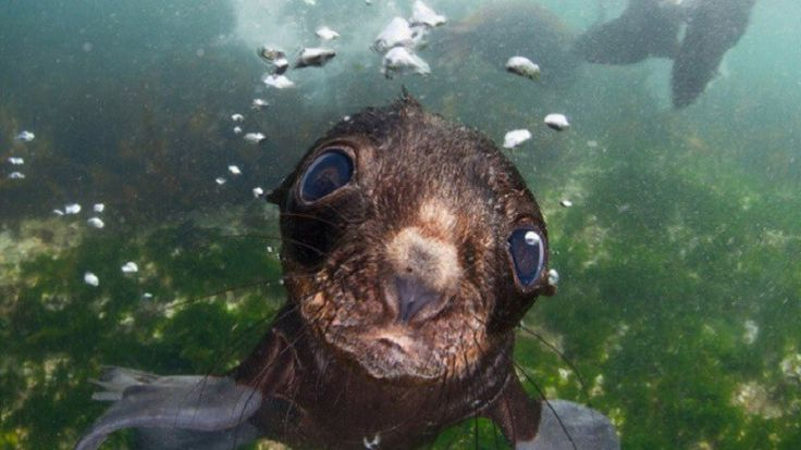 When You See This Cute Seal Pup, You'll Be Hypnotized! #sea #ocean