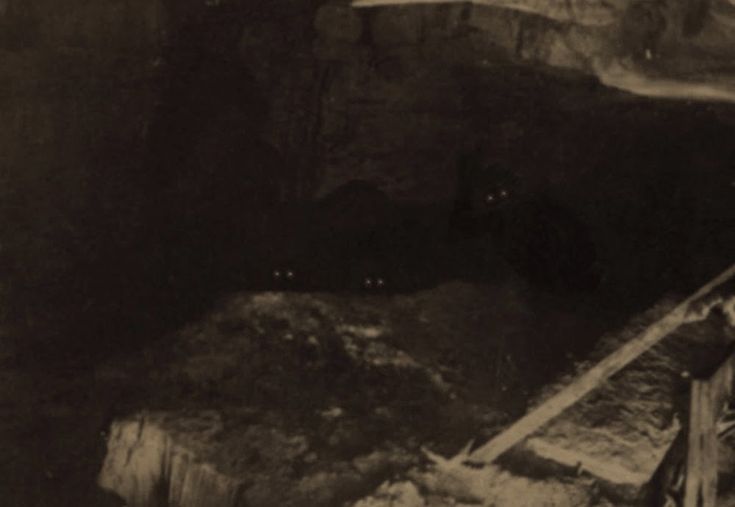 Image result for cryptid photographs