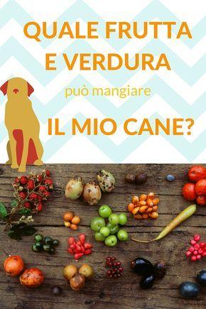 Quale frutta e verdura può mangiare il mio cane?