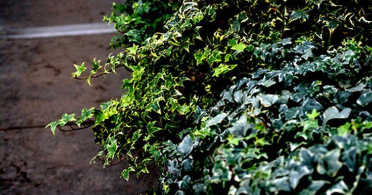 M s de 25 ideas incre bles sobre perennes de sombra en for Plantas perennes exterior