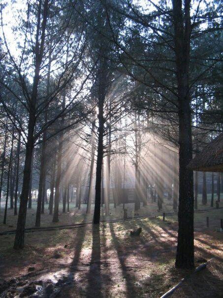 Lakenvlei Forest Lodge, Mpumalanga, South Africa