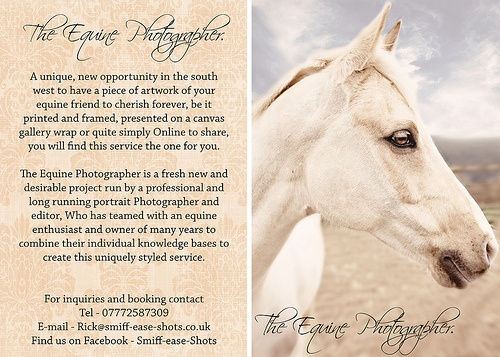 The Equine Photographer Flier