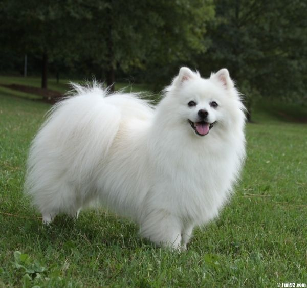 Best Indoor Small Purebred Dogs