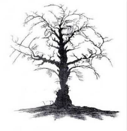 Easily a Family tree....tattoo anyone?