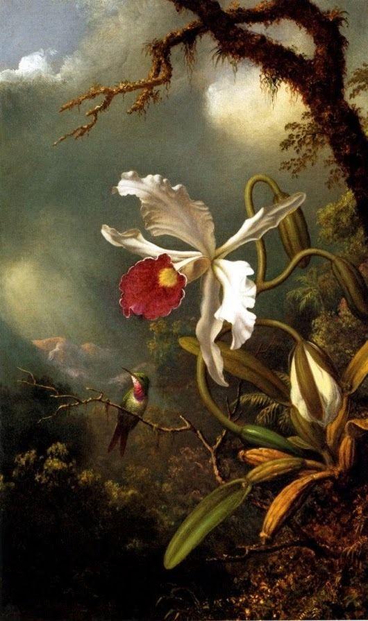 """Résultat de recherche d'images pour """"orquideas e beija flor"""""""