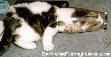 #cat loves a #pint