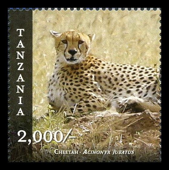 Tanzania 2015 MNH Wildlife of Tanzania / Cheetah (Acinonyx jubatus)/ Tanzania is in East Africa within the African Great Lakes region. It is bordered by Kenya and Uganda to the north; Rwanda, Burundi, and the Democratic Republic of the Congo to the west; Zambia, Malawi, and Mozambique to the south; and the Indian Ocean to the east. Kilimanjaro, Africa's highest mountain, is in northeastern Tanzania.