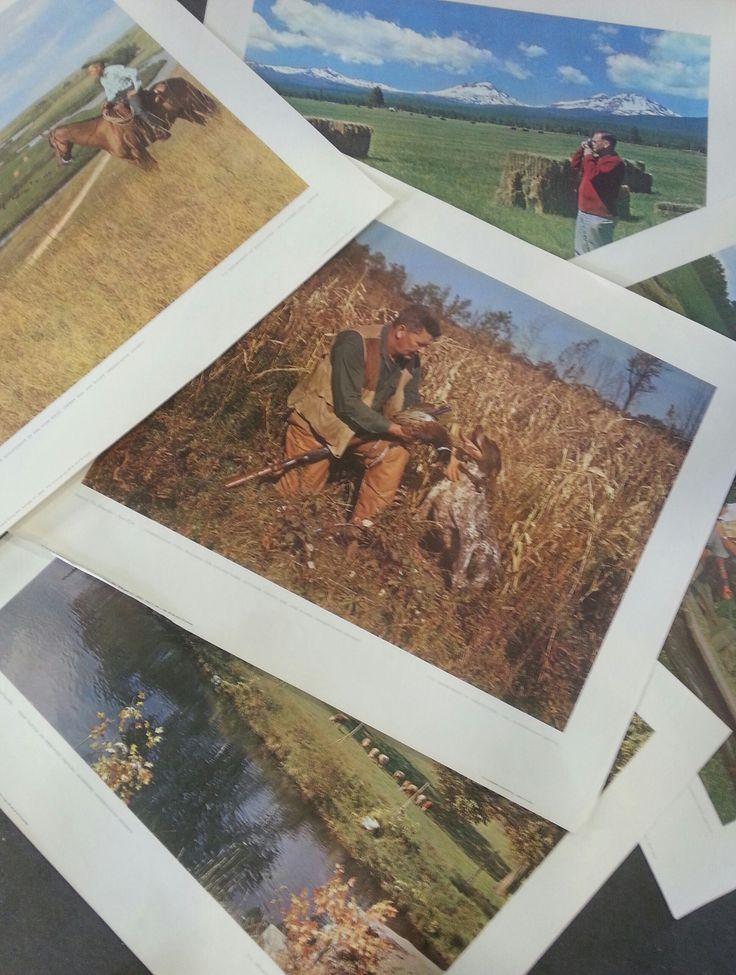 vintage agricultural prints