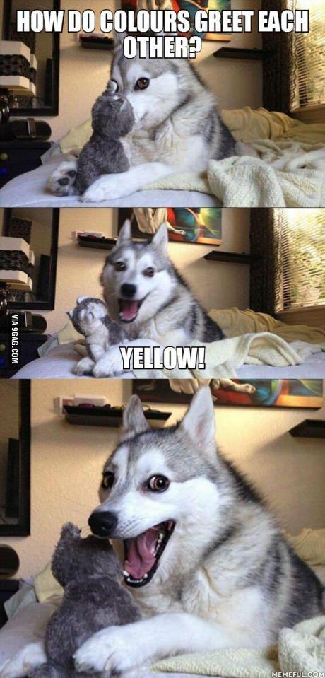 Pun Husky, pls.            yellow!.