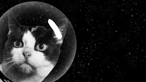 Puss in boots or rather cats in space suits.  Cats and other animals have long been part of the human quest to explore and study outer space. Footage from 1947 shows how the US Air Force placed cats and pigeons in a zero-gravity simulated aircraft to study how humans would fare in space. However, the Americans never sent an actual cat into space, the French did. Luckily Fèlicette survived, enabling the scientists to test if her brain was impacted by spaceflight.
