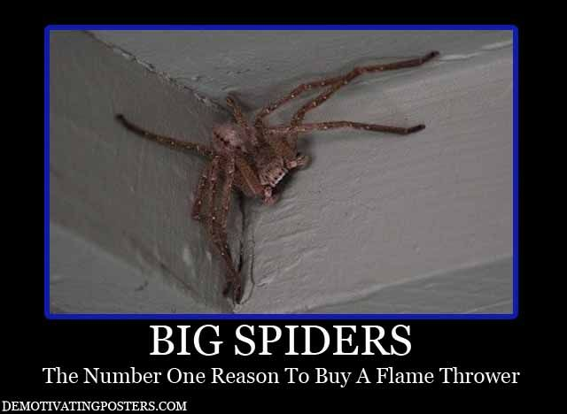 139 best images about Nope. Nope. Nope. on Pinterest