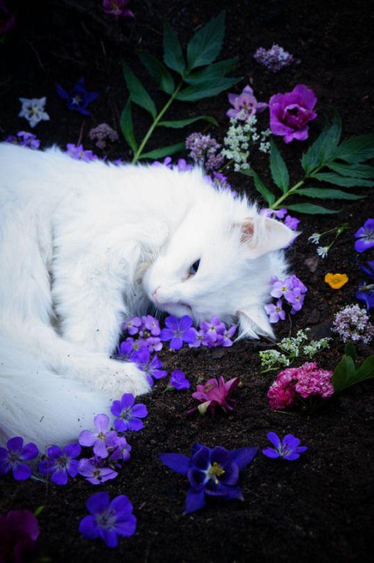 #cat #love #animals #animais #gato #amor #flores #grama #gatobranco #bromelias #violeta #biodiversidade #vidanaterra