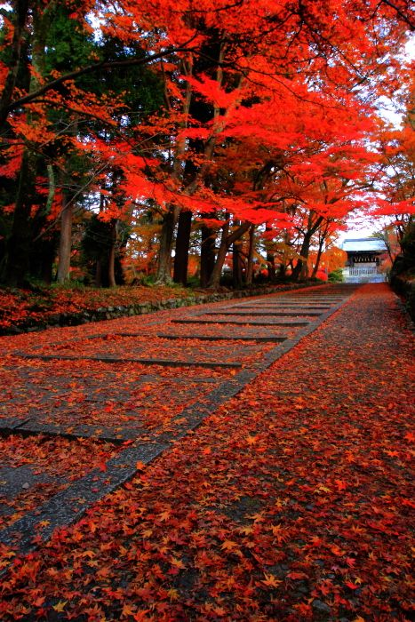 Kyoto, Japan 毘沙門堂 #Kyoto #AutumnLeaves #紅葉