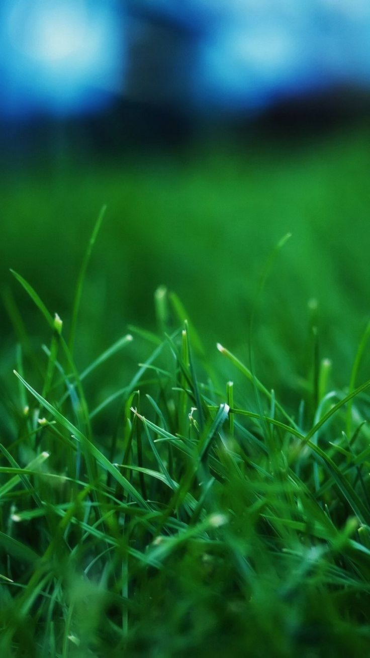 Grass Wallpaper of iPhone 6