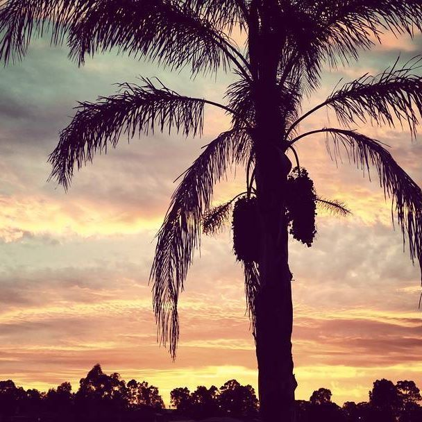 The beautiful sunset view from my front yard yesterday afternoon 😘  #sunset #palmtree #tropical #aussie #australia #fitness #beautiful #happynewyear #newyear #happiness #serenity #nature #outdoors #shoalhaven #nowra #nsw