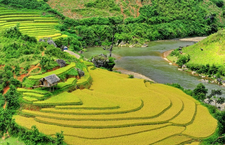 In here, you can see the terrace rice field anywhere, from the top of mountain or touching to the river.