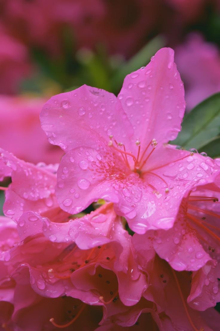After the Rain    Smug: http://goo.gl/yTQdG   Flick: http://goo.gl/lPBOq: Http Goo Gl Ytqdg Flicks, Http Goo Gl Lpboq