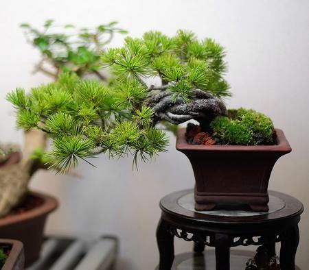 les 62 meilleures images du tableau www.maitre-bonsai.fr sur