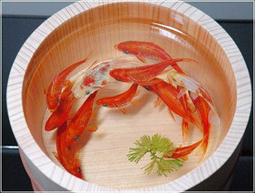 Best D Painting Images On Pinterest D Painting Resins And - Incredible 3d goldfish drawings using resin