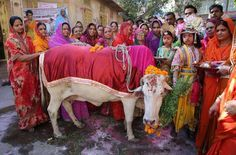 Devotos hindúes vestidos como el Señor Krishna y Radha, se reúnen durante la Adoración de la vaca en Jodhpur.