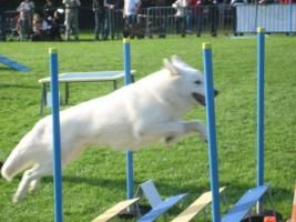 Photos | Club Canin de l'Iroise