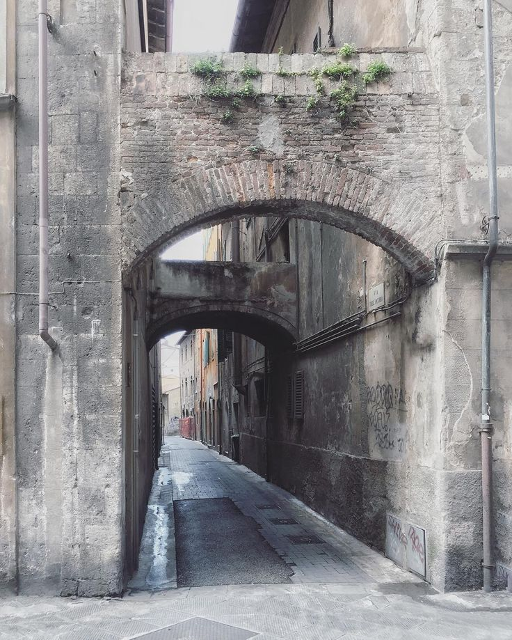 #vihomairaccontato dei #giardini pensili che crescono timidi tra i vicoletti di Pisa? . . . . #igerspisa #igerstoscana  #visitpisa #pisaconnection #vivopisa #tuscanybuzz #discovertuscany #ilikeitaly #toscana #italia #italy #tuscany  #toskana #toscane #Тоскана #Пиза #browsingitaly  #greenmag #archidaily #archiporn #architettura #architecture by gibipi